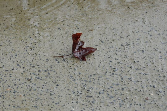 """""""Lonely Leaf In The Rain,"""" a photo by William May, at Riverfront Renaissance Center For The Arts in Millville."""