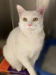 Snowball is waiting for a forever home.