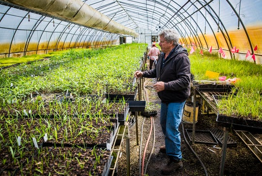 Doug Spence in a greenhouse at Spence Restoration Nursery Tuesday, April 21, 2020. The nursery fabricated a milkweed gin that automates the process of separating milkweed pods from their seeds and floss.