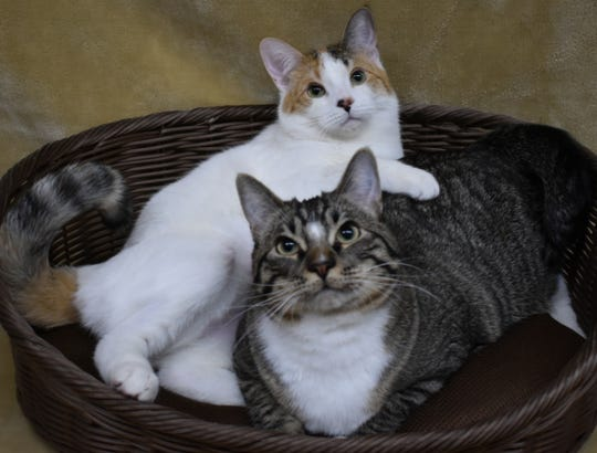 Nellie and Jodie are available for adoption at the Lake Pleasant Towne Center PetSmart. For information, call 623-773-2246, 10 a.m.-3 p.m.