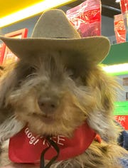 Fika, a  four-pound Dachshund, enjoyed the Global Pet Expo in Orlando in February.