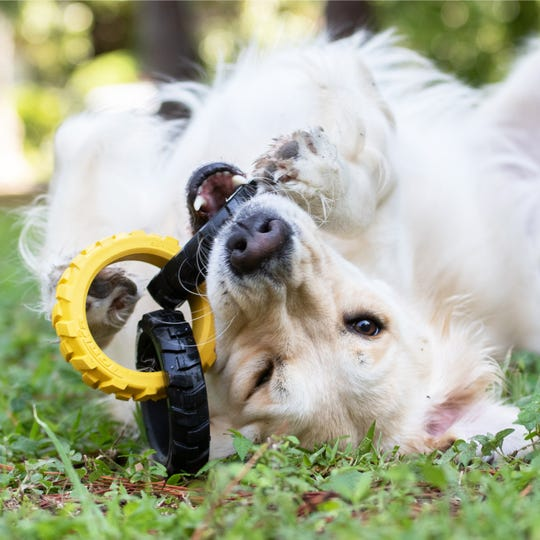 Hagen's Tonka line, introduced at the 2020 Global Pet Expo, includes chew toys, tugs, feeders and treat holders, all made with real tire rubber that will test the gnawing power of the most energetic canine.