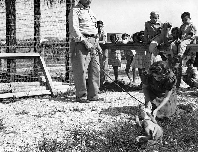 Frances Lee Dunn pets Maggie the coyote as Corpus Christi zookeeper Dick Flores looks on in September 1938. The city operated a zoo with bears, lions, and other animals first in South Bluff Park and then Ben Garza Park. The zoo closed in 1946. Photo by Doc McGregor, courtesy of the Corpus Christi Museum of Science and History.