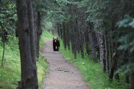Encountering a bear on a trail in the Helena-Lewis & Clark National Forest
