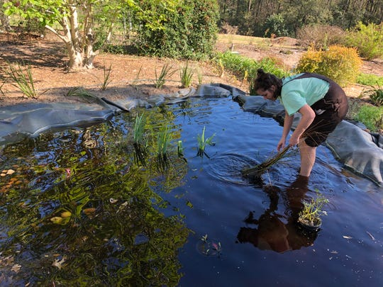 Rachel Mathes arranges native plants in the pond after it is first filled with water.