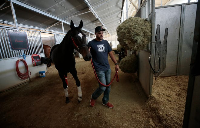 Gabriel Calderon returns Beautiful Ballad to her stable at Sunland Park Racetrack Wednesday. El Paso Trainer Justin Evans is traveling to Nebraska to race due to the closure of area racetracks dues to coronavirus.