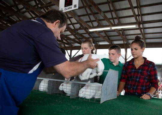 Rabbit and horse shows proved popular at the Ross County Fair.