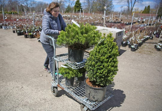 Monika Lutz of West Allis pushes a cart of shrubs while shopping at Minors Garden Center in Milwaukee on April 19.