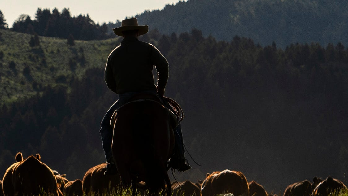 Allegations of meatpacker collusion rise as independent ranchers struggle to survive