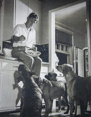 Louis Bromfield, feeds his dogs while setting on the counter in the kitchen.