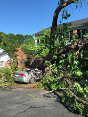 An uprooted tree damaged a car during storms in Greenville on Saturday, April 25, 2020.