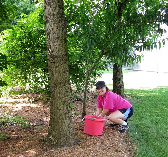 Master Gardener Cari Weaver working in the garden.  The Master Gardeners are encourage people to start gardens this spring and are providing tips for beginners.