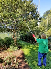 Master Gardener Reta Grewell prunes a tree at Lake Park. The Master Gardeners have projects throughout the county along and provide tips and assistance to residents with gardening questions.