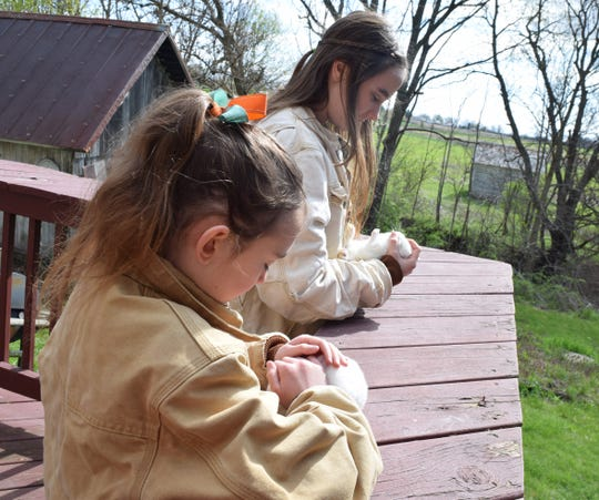 Sisters Rachel and Allison Sponseller practice inspecting their rabbits on Wednesday, April 21. They plan on showing the rabbits at the Fairfield County Fair in the fall. With the ongoing pandemic, it's unclear if the fair will be held or not.