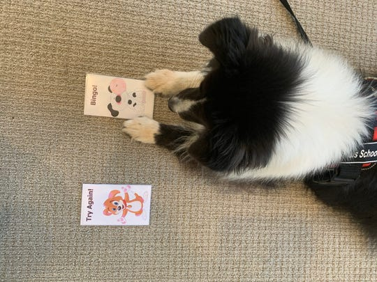 """Oreo hits the """"Bingo"""" card to encourage a student in a reading session at Calais School in Whippany."""