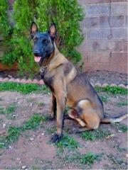 Alamogordo Police Department K-9 Odin