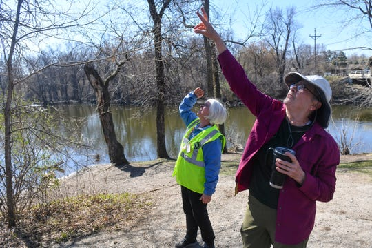 Volunteers Maureen Graber, right, and Linda G. Tenneson talk about the methods they use to identify trees damaged by the emerald ash borer Monday, April 27, 2020, along the Mississippi River near St. Cloud.