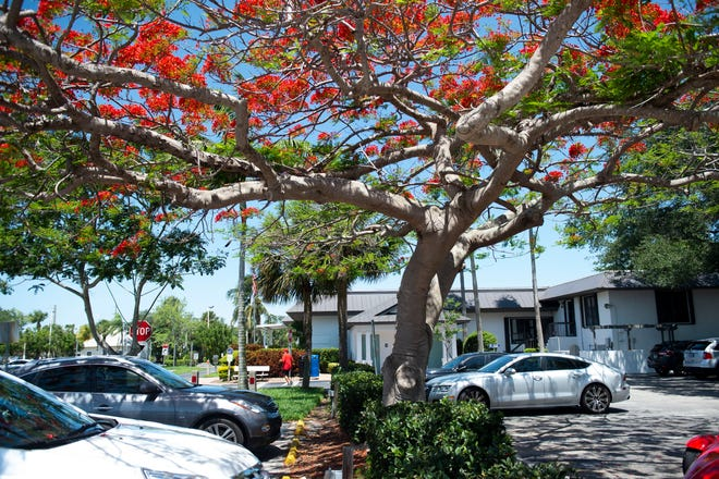 City of Stuart has plans for a more sustainable, environmentally-friendly future