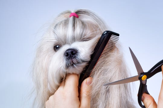 A pet care expert advises that owners not trained to do so should not cut or shave their own dogs.