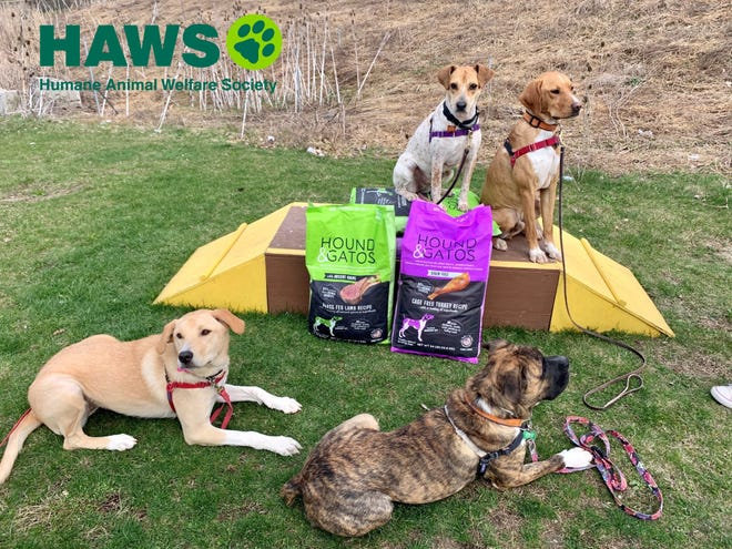 Four dogs will graduate from a joint program between Carroll University and the Humane Animal Welfare Society of Waukesha County.