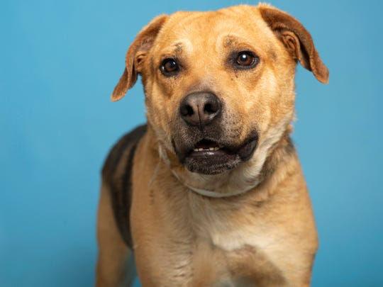 Interested adopters can view available pets, like Taro, and schedule an appointment online at azhumane.org/adopt.