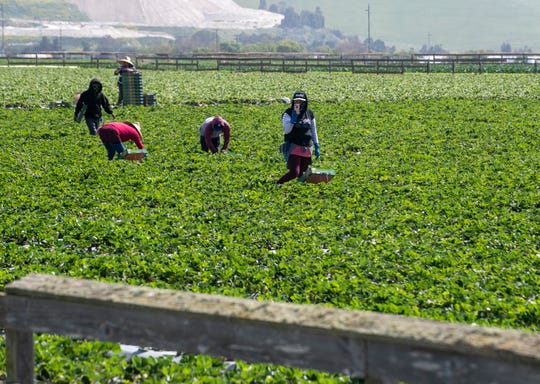 People from around the Monterey County flocked to the fields of Salinas for the Salinas Farmworker Appreciation Caravan to show their appreciation for the essential farmworkers who continue to work during this pandemic on Saturday, April 25, 2020.
