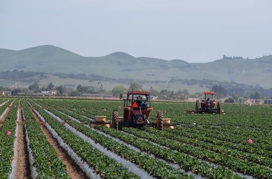 Personas de todo el condado de Monterey acudieron a los campos de Salinas para acompañar a la Salinas Farmworker Appreciation Caravan para mostrar su agradecimiento a los trabajadores agrícolas esenciales que continúan trabajando durante esta pandemia, el sábado 25 de abril de 2020.