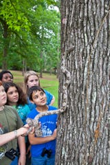 In one of St. Francis Wildlife's Wild Classroom programs, students learn how a grey rat snake is able to travel up a tree while using camouflage to protect itself.