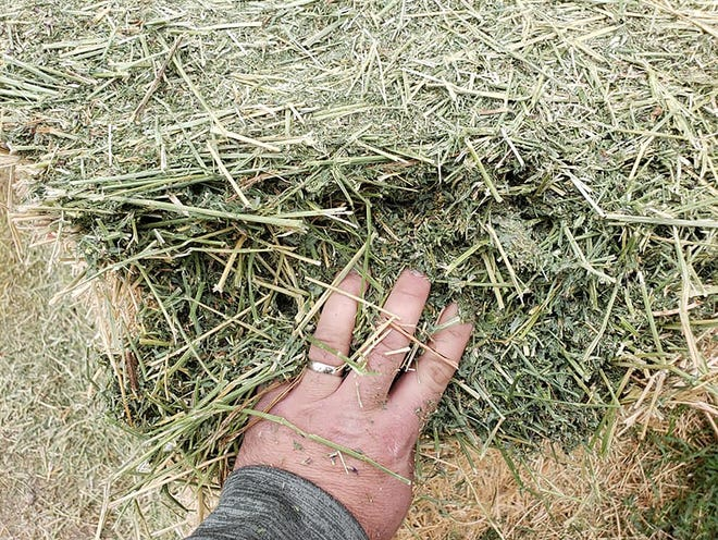 Quality matters. Hay baled at higher moisture levels reduces the risk of leaf loss. In alfalfa, the leaves contain 70% of the plant's protein and 90 percent of its vitamins. A long-term hay trial in Minnesota showed bales treated with Anchor cured faster and maintained relative feed value 30 points over control.