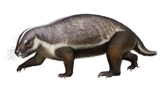 An artist's conception of Adalatherium hui, a newly discovered mammal, whose fossil was found in Madagascar.