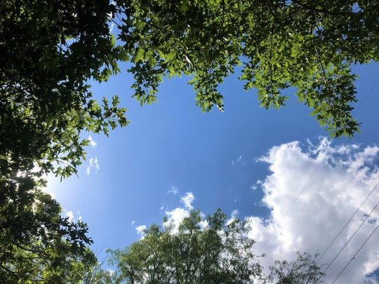 After putting netting around our trampoline, I laid on the mat and looked at a fine Texas spring day above me. I almost took a nap.