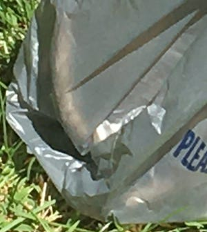 This is a close-up shot of a portion of Nukuler Rat's tail as seen through a plastic bag.