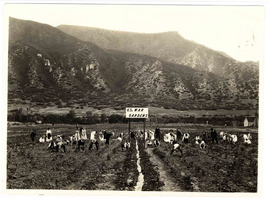 People are working in a field at a U.S. War Gardens plot in Glenwood Springs, Colorado during World War I.