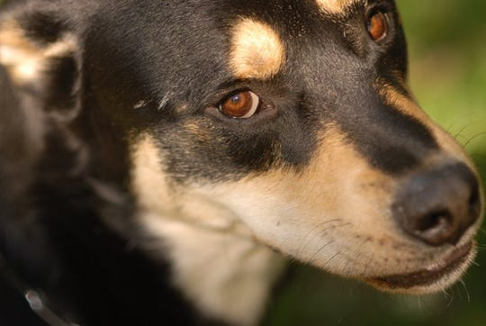 Riley, a 12-year-old rescue dog, was a beloved member of the family.