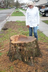 Farmington HIlls resident Ann Zaron looks at the stump of one of the many trees the city has felled in recent days as it works on road and curb improvments (another stump is seen in the background). Zaron is concerned that too many large, healthy trees are being removed from the area.