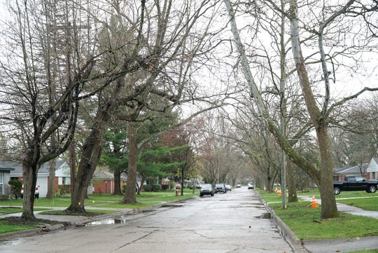 Zaron says that most of the large trees along Tuck Street where she lives have been marked for removal.