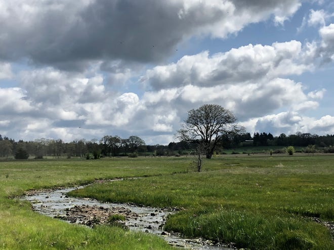 Kingston Prairie, a preserve that retains the biological diversity of the Willamette Valley as it was before settlers arrived.
