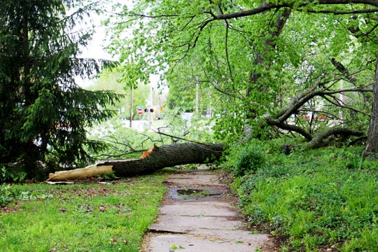 A felled tree blocks a sidewalk along the 600 block of south Weller Avenue April 29, 2020.