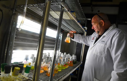 St. Cloud State biology professor Matt Julius examines vessels used to grow algae Tuesday, April 28, 2020, at the Robert H. Wick Science Building in St. Cloud.