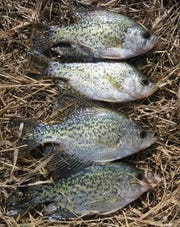 Shore fishing for panfish can be quite productive in the spring.