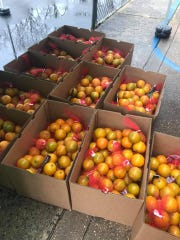 Boxes of fruit that were given out to Toms River residents April 24, 2020.