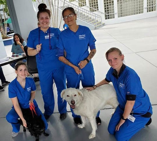 Members of the Cape Coral Tech Veterinary Assisting program.