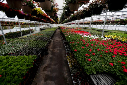 Larry's Bellevue Gardens, 2620 Continental Drive in Bellevue, is ready for the growing season. Like other local greenhouses, it will limit shoppers in its greenhouses and offer pickup orders due to the coronavirus outbreak.