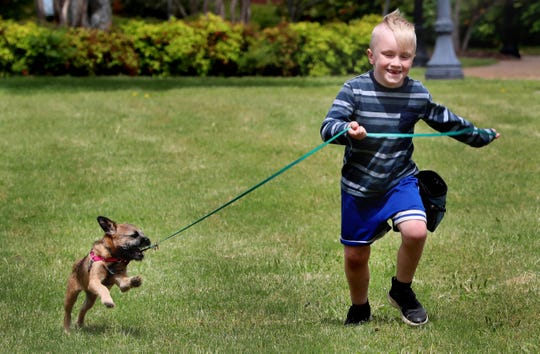 MJ Shirley, 7, runs with Cookie Dough on Thursday, April 30, 2020. Shirley's family is with Family Pet Health, which is joining forces with Heather Moore from Wag It Better Dog Training to start the Walk my Dog program.