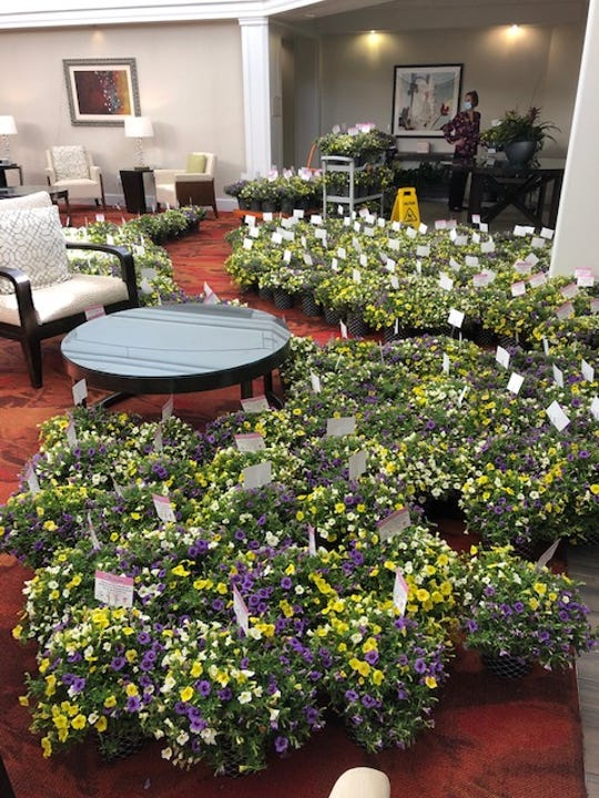 Residents and staff at the Carlisle Naples received 400 potted plants.