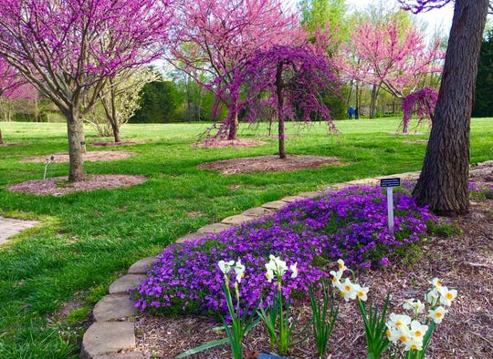 Susan Neese shared some of her photos of views of spring.