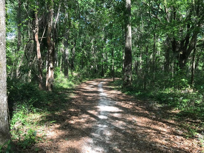 A shaded walk in the woods clears the mind and stimulates thoughts about life.