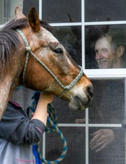 Park Terrace resident Kevin Smith smiles as licensed practical nurse Kayla Bell and a red roan horse named Hero greet him at the window during a visit from the Horses of Hope, an American Senior Communities Calvary program, to the ASC facility located on Evansville's west side, Tuesday afternoon, April 28, 2020.
