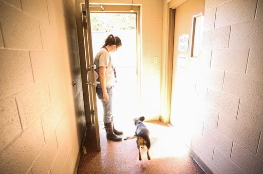 Chloe Wossom, a part-time employee of the New Albany Animal Shelter, lets out a dog for exercise to the dog run area Friday morning. The dogs get out twice a day for exercise and play.