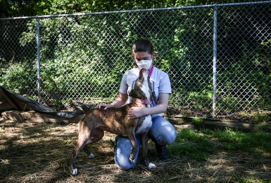 Chloe Wossom, a part-time employee of the New Albany Animal Shelter, pets boxer mix Edwina in the dog run area Friday morning. The dogs get out twice a day for exercise and play.